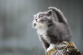 Can cats transmit the new form of Coronavirus that's been in the ...