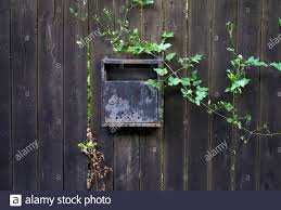 Old Metal Mailbox On A Black Wooden Fence With Wild Plants Grown Around Image Of Decay Stock Photo Alamy