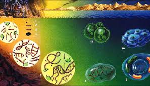 EVOLUCIÓN | Bio (Ciencia+Tecnología)