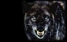 Angry Wolf Wallpapers Top Free Angry Wolf Backgrounds