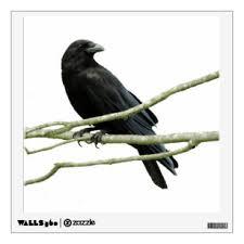 Crow Wall Decals Stickers Zazzle
