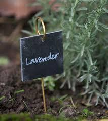slate plant label father rabbit new