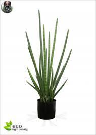 san severia alberi e piante con fusti