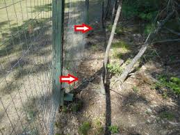 Electric Fence For Chickens Swampy Acres Farm Blog
