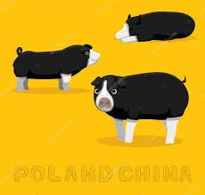 ✅ Pig Poland China Cartoon Vector Illustration premium vector in Adobe  Illustrator ai ( .ai ) format, Encapsulated PostScript eps ( .eps ) format
