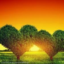 nature images whatsapp dp nature