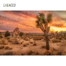 خلفيات الطبيعة Laeacco لصبار الصحراء شجيرة غروب الشمس حجر أورورا