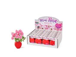 mini rose grow kit per pot seeds and