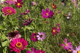 beau garden bedding plants spot and