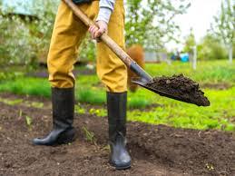 how to improve clay soil saga
