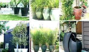 large pots for trees extra trabaho me