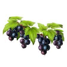 Black Grapes (నల్ల ద్రాక్ష)