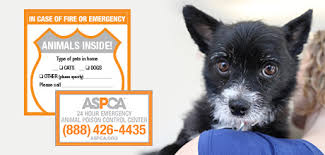Pet Safety Pack Emergency Rescue Window Sticker Aspca