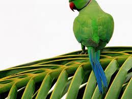 صور طيور Hd خلفيات و رمزيات طيور منوعة جميلة سوبر كايرو