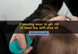 use olive oil for head lice treatment