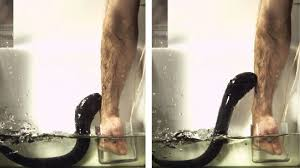 It S Like An Electric Fence Sensation Says Scientist Who Let An Eel Shock His Arm The Two Way Npr