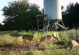 the basics of using deer feeders feed
