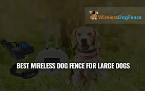 Best Wireless Dog Fence For Large Dogs 2020 Reviews Buyer S Guide