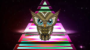 hd wallpaper brown owl ilration