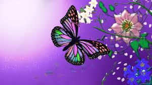 erflies and flowers wallpaper