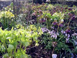 design and plant a woodland garden