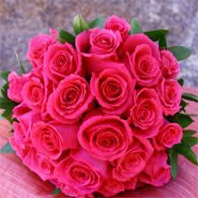 hot pink roses silentforce photo