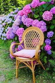 Endless Summer Hydrangea Lovely Garden Flowers And Patio Decor