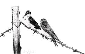 Barbed Wire Courtship Drawing By Judy Garrett