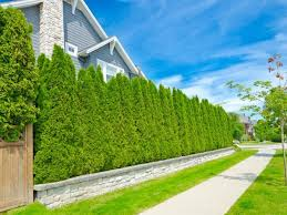 How To Reduce Noise In Your Yard The Money Pit
