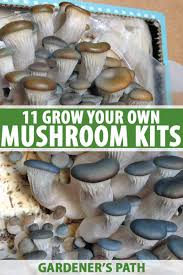 the best 11 mushroom kits to grow your