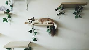 cat wall shelves and perches