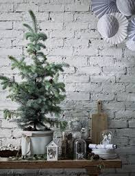 caring for a potted christmas tree