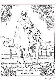 Paarden Kleurplaat 38128 Kleurplaat