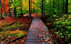 مناظر طبيعية جميلة عالية الجودة Nature Desktop Hd Nature