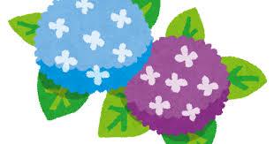 梅雨のイラスト「紫陽花」 | かわいいフリー素材集 いらすとや