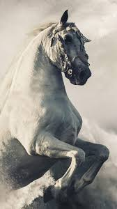 horse phone wallpapers top free horse