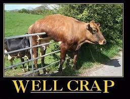 Image Result For Cow Stuck In Fence Joke Funny Animals Funny Pictures Funny
