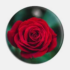 romantic red rose red roses pin