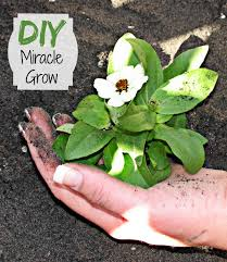 home made miracle grow make your own