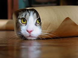 burrito cat tacocat s brother meme