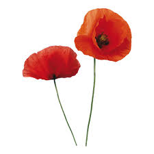 Cr 57105 Home Decor Line By Brewster Cr 57105 Home Decor Line Poppies Wall Decals Goingdecor