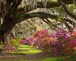 20 experience gifts in south carolina