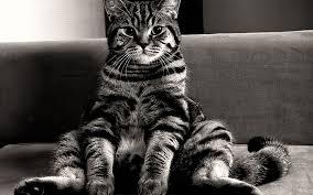 Obrázky na plochu : 1920x1200 px, mačky, gauč, Monochrome, sediaci ...