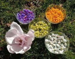 Professional Gardeners' Trust report – Bertie Smith RBGE Herbology ...