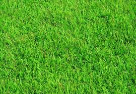 homemade fertilizer for lawns bob vila