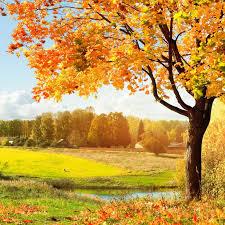 Plakat Jesienny krajobraz • Pixers® - Żyjemy by zmieniać
