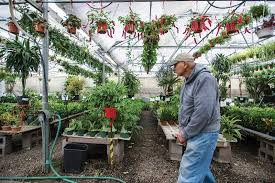 kicking out longtime bayview greenhouse