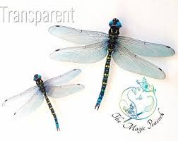 Dragonfly Decals Etsy