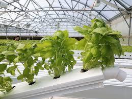 organic farm hydroponic greenhouse