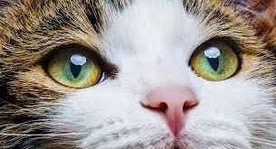 cat eye colors an amazing range of shades